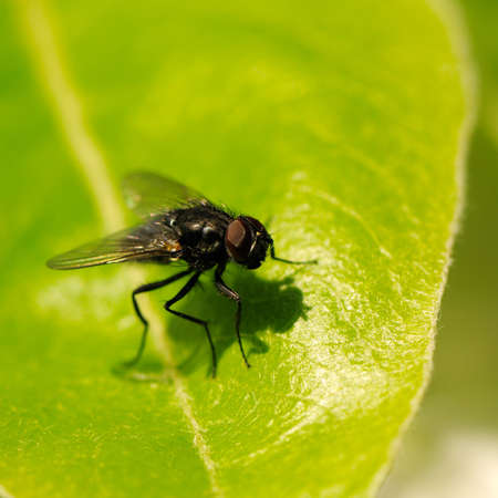transmissible: fly close up