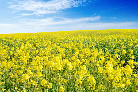 yellow flowers on spring field Stock Photo - 3004810