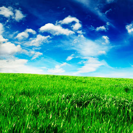 Green spring meadow Stock Photo - 3025221