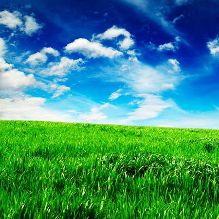 Green spring meadow Stock Photo - 3025221