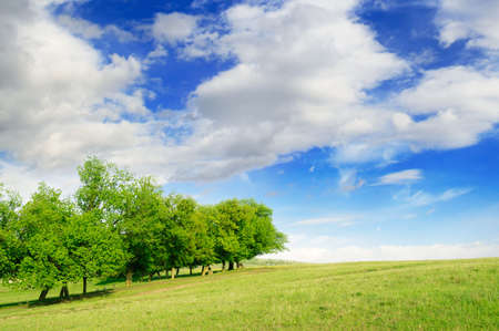 Green field and blue sky Stock Photo - 3025194
