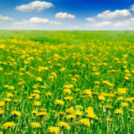 dandelions on spring field Stock Photo - 3025212