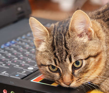 The kitten has a rest on the keyboard of a personal computer. Stock Photo - 3061094