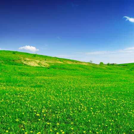 meadow covered by a grass Stock Photo - 3061111