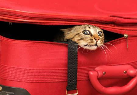 pussy cat: Cat in a suitcase