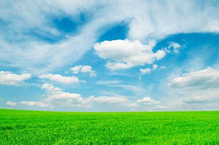 la primavera de campo y el cielo azul  Foto de archivo