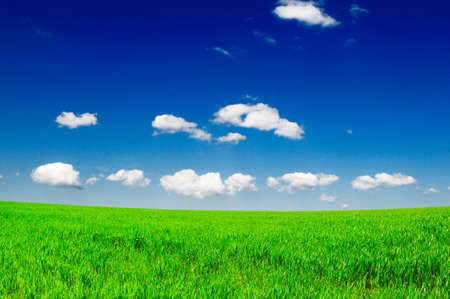 lea: field and beautiful clouds