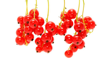 red currant isolated on a white background                                     photo