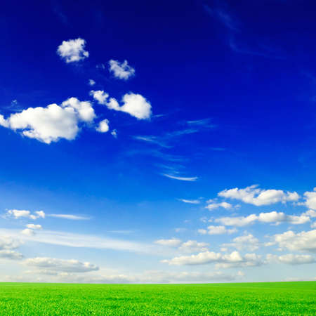 field on a background of the blue sky                                     Stock Photo - 3182676
