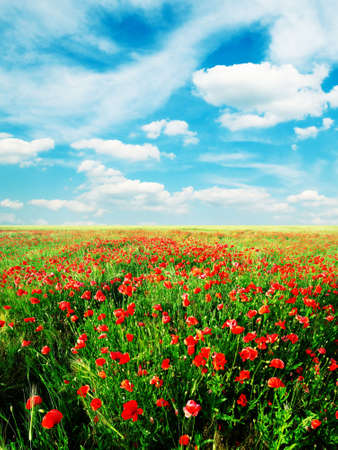 red poppies on green field Stock Photo - 3218383