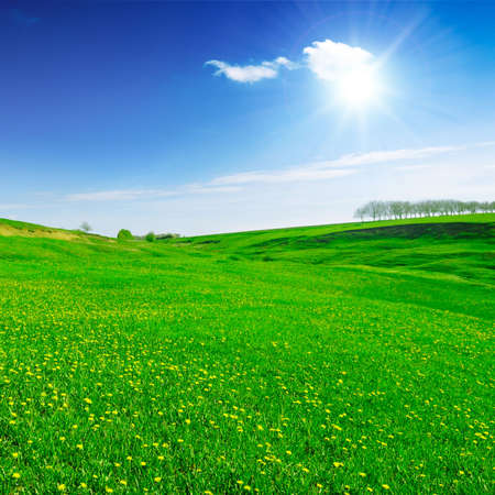 field covered by a grass                                     Stock Photo - 3218376