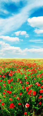 red poppies on green field Stock Photo - 3218373