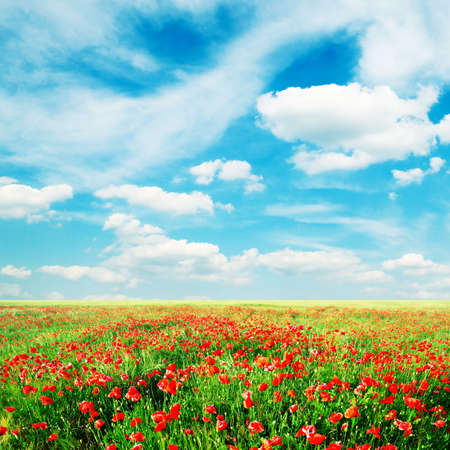 red poppies on green field Stock Photo - 3246260