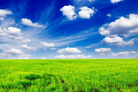 field on a background of the blue sky                                     Stock Photo - 3273418