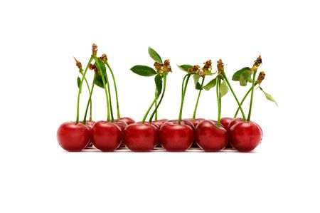 cherries isolated on a white background                                     Stock Photo