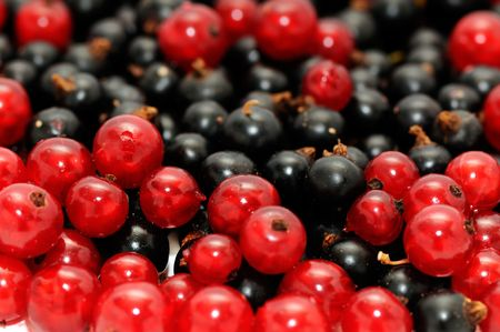 red currant and  blackcurrant                                    photo