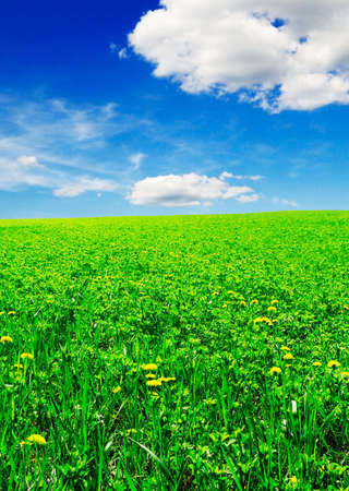lea: green meadow covered by a grass