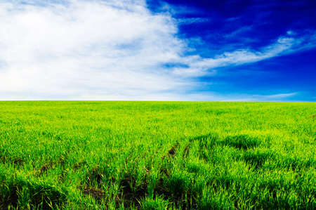 green meadow covered by a grass Stock Photo - 3470600