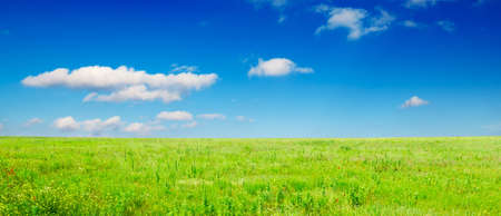 green meadow covered by a grass Stock Photo - 3470572