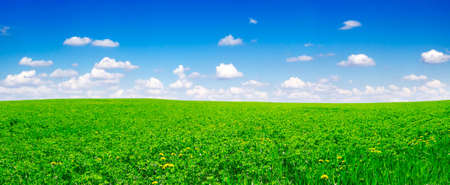 field covered by a grass Stock Photo - 3507329