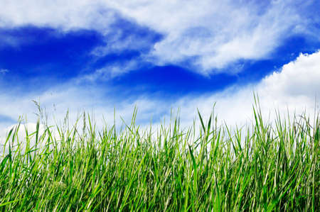 green field, blue sky, white clouds                                    Stock Photo - 3743646