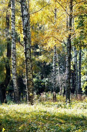 autumn wood                                    photo