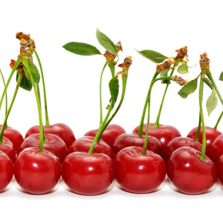cherries isolated on a white background       Stock Photo - 4000719