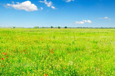 spring field  photo