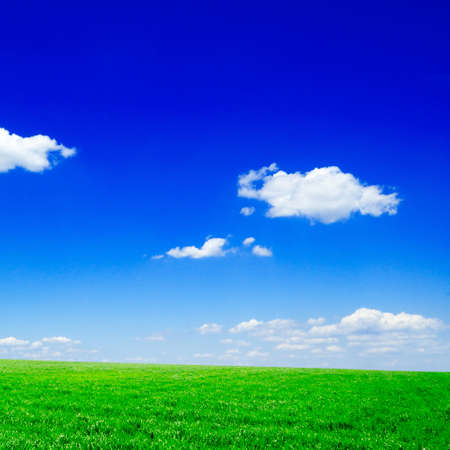 lea: green spring field and the blue sky Stock Photo
