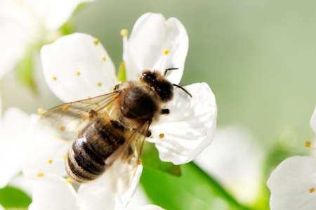 collects: bee collects flower nectar