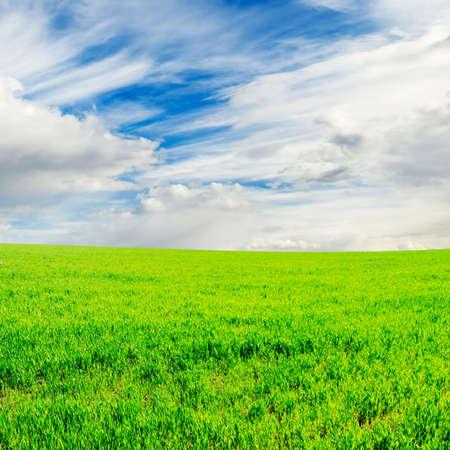 lea: spring field