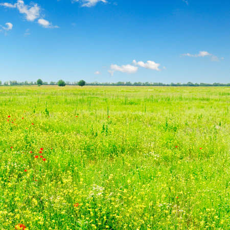 lea: green spring field and beautiful white fluffy clouds