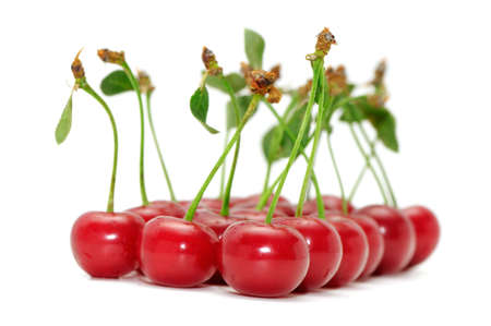 cherries isolated: sweet cherries isolated on a white background