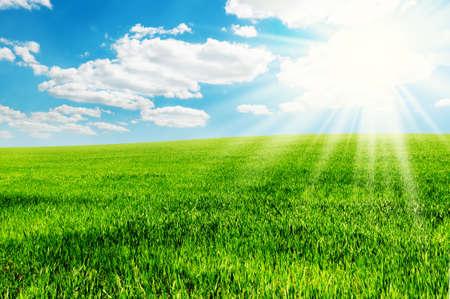 field and sun Stock Photo