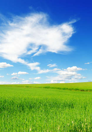 field and sky                                     Stock Photo - 5314524