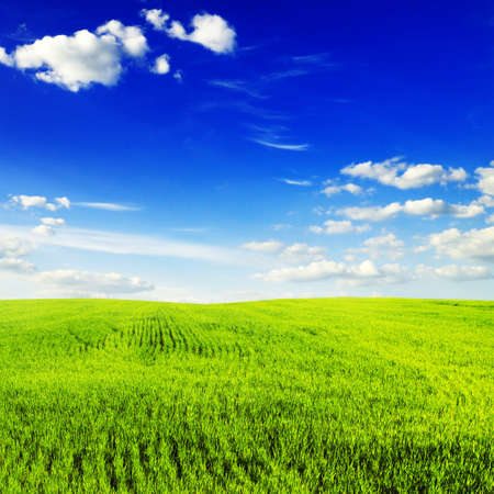 spring field and the blue sky Stock Photo - 6185586
