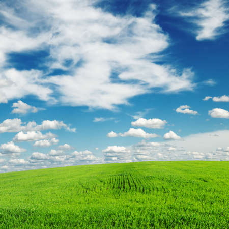 meadow covered by a grass Stock Photo - 6282366