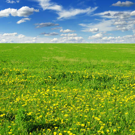 meadow covered by a grass Stock Photo - 6315027