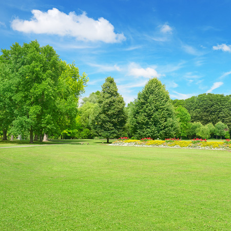 clearing: Beautiful meadow in the park                                     Stock Photo