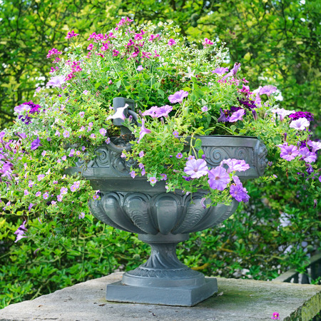 beautiful flower bed in vase                                     photo