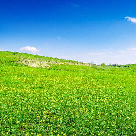 afield: blue sky and green field