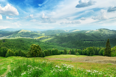 forest landscape: Beautiful mountains covered trees                                     Stock Photo