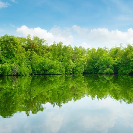 Mangroves and blue sky                                     photo
