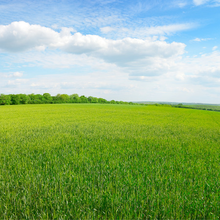 blue sky and fields: spring meadow and blue sky                                     Stock Photo