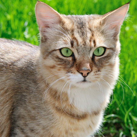catling: cat on a background of a green grass