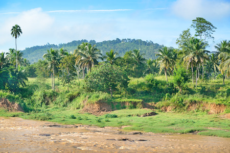 Equatorial forest near the river photo