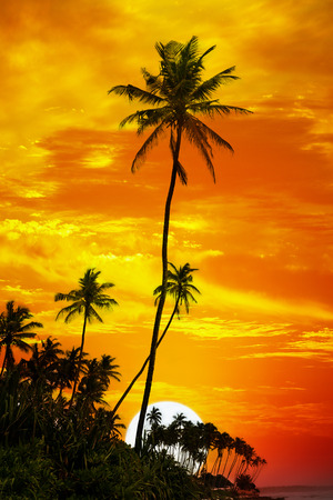 Palm trees silhouetted on sunset background photo