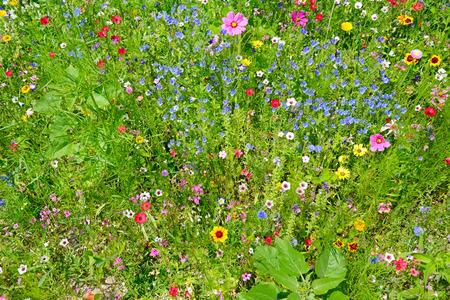 flowering field: wild flowers on green meadow