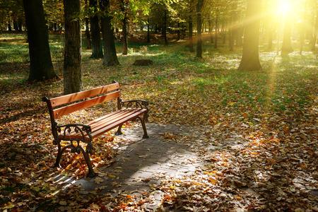 Dawn in the autumn park photo