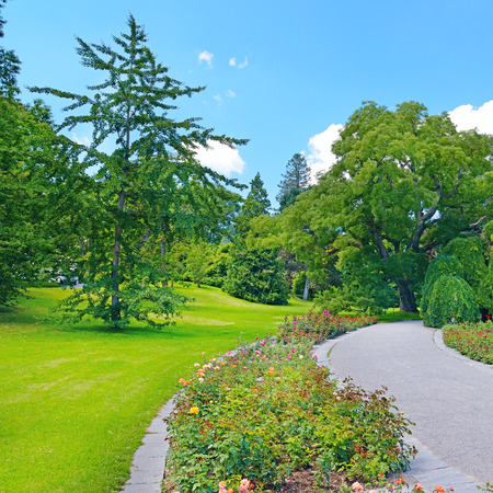 forest park: Footpath in a summer park